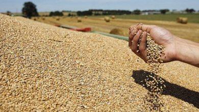 صورة المغرب يعلق مؤقتا الضرائب على واردات القمح الطري