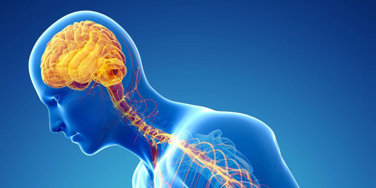 صورة ساعة بيولوجية للجلد تعمل باستقلال عن الدماغ