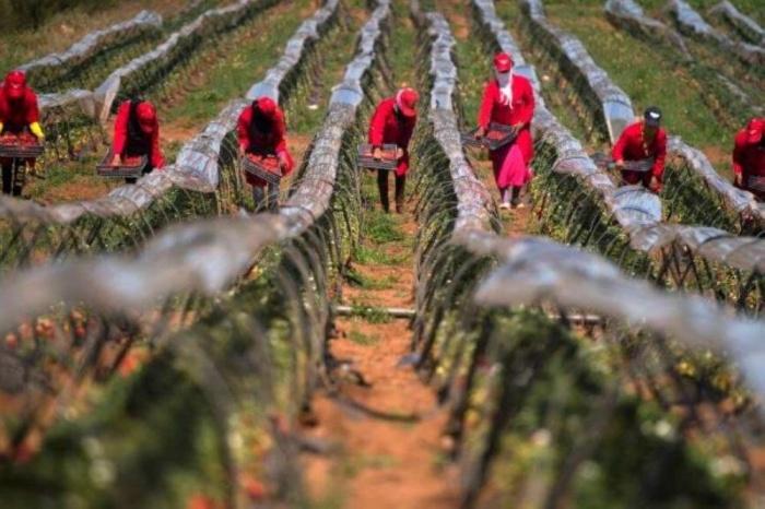 صورة تقرير: الفلاحة تتصدر تشغيل الأيدي العاملة بنسبة 3 بالمائة في المغرب