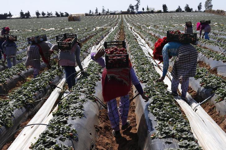 """Photo of الخضري لـ""""الدار"""": نقل العاملات الزراعيات يتحكم فيه سماسرة النقل السري"""