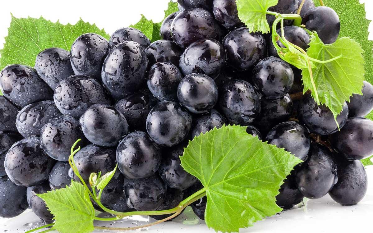 صورة دراسة: العنب يكافح سرطان البنكرياس
