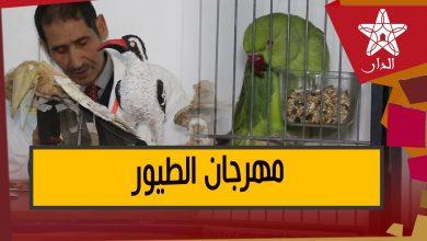 صورة كيف يقبل المغاربة على تربية هذه الطيور النادرة في منازلهم بل حتى الزواحف