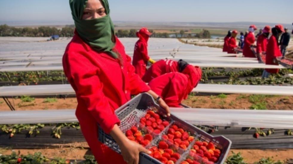 صورة إفريقيا تواجه تحدي ضمان الأمن الغذائي في ظل تقلبات مناخية متواترة