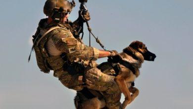 Photo of بسبب سوء توظيفها..الخارجية الأمريكية تستعيد 10 كلاب عسكرية من المغرب