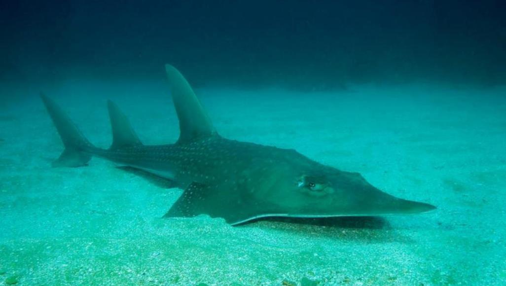 صورة 28 ألف نوع جديد من الحيوانات والنباتات تواجه خطر الانقراض