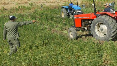 """Photo of """"البام"""" ينتظر تقنين زراعة الكيف لمناقشة """"العفو"""" عن مزارعيه"""