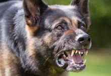 "Photo of كلب مسعور يشتبه في جلبه من المغرب ""يستنفر"" سلطات اسبانيا"