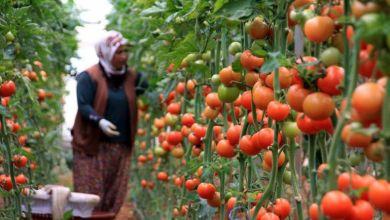 صورة المغرب يتسيد قائمة البلدان المصدرة للخضر والفواكه إلى اسبانيافي 2019