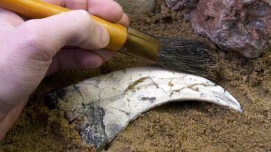 Photo of تفاصيل دراسة حديثة كشفت أن زواحف طائرة عاشت في المغرب قبل 100 مليون سنة