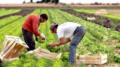 Photo of في زمن كورونا المغرب يحافظ على إنتاجه الفلاحي بشكل عادي