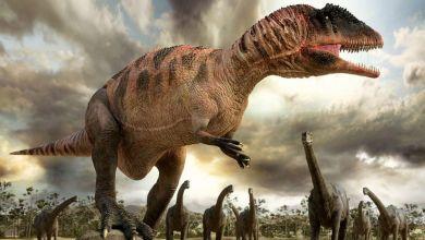 صورة حفريات في الجنوب الشرقي للمغرب تظهر قدرة ديناصور سبينوصورس على السباحة