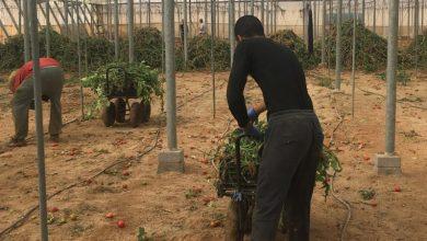 صورة يشكلون الجنسية الثانية ضمن الوافدين…وصول124 عاملا زراعيا إلى إيطاليالإنقاذ محاصيلها الزراعية