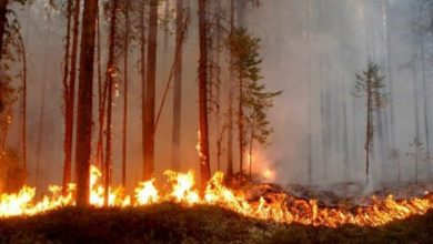 """صورة السيطرة على حريق بغابة """"غيغاية"""" بإقليم الحوز"""