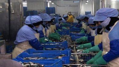 صورة عاجل.. متابعة مسؤولين بوحدة صناعية لتصبير الأسماك بآسفي بسبب كورونا