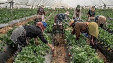 صورة بعد ترحيل 7100 عاملة مغربية…اسبانيا تبحث عن عاملات في الهندوراس وأمريكا اللاتينية