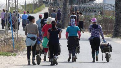 صورة تحقيق: حقوق العاملات الموسميات المغربيات بهويلفا تنتهك على جميع الأصعدة