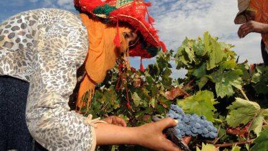"""صورة تقرير يرصد بالأرقام تراجع رقم معاملات شركات الخمور بالمغرب بسبب """"كورونا"""""""