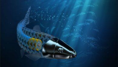 صورة ابتكار سمكة روبوتية مجهرية لإيصال الأدوية داخل جسم الإنسان