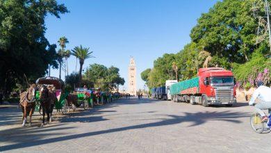 """صورة مراكش .. توزيع 84 طنا من الأعلاف لفائدة أصحاب عربات """"الكوتشي"""""""