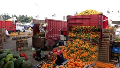 صورة بأزيد من 8 مليارات درهم…المغرب يتصدر قائمة موردي الخضر والفاكهة لإسبانيا