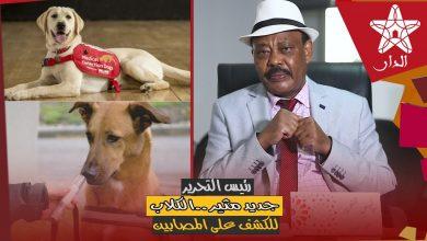 صورة طلحة جبريل في حلقة جديدة من رئيس التحرير: ..الكلاب للكشف على المصابين