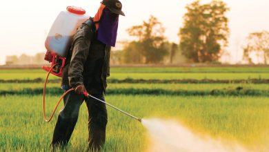 صورة Rainbowالصينية الرائدة عالميا فيالصحة النباتية تفتتح فرعا بالمغرب
