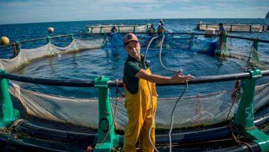 """صورة اتفاق الصيد البحري بين الرباط وموسكو يفشل مناورات """"بوليساريو"""" والجزائر"""