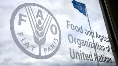 صورة انتخاب المغرب عضوا في مجلس إدارة برنامج الغذاء العالمي للأمم المتحدة