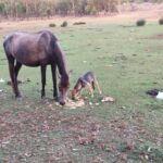 حصان وكلب يتشاركان الطعام